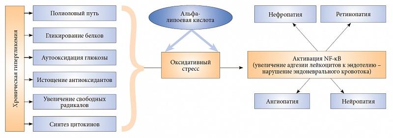 Липоевая кислота при сахарном диабете