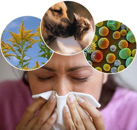 Аллергии.