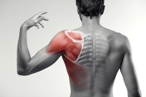боли в мышцах спины вдоль позвоночника причины и лечение