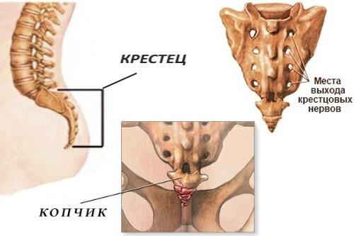 боли в нижней части спины в пояснице ближе к копчику