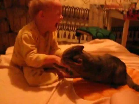 Дети часто сами провоцируют животное на агрессию и получают в ответ ранки и царапины, которые могут принести массу нежелательных последствий