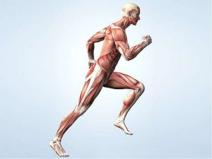 За что отвечает инсулин в организме?
