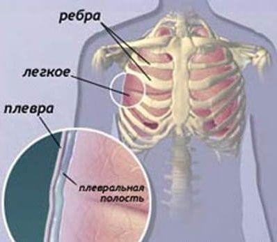 Основы анатомии