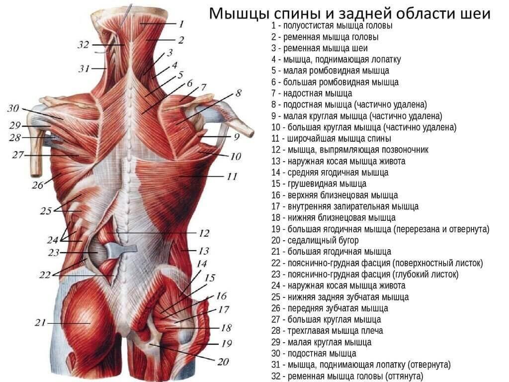болят продольные мышцы спины