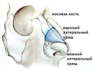 Хрящевые ткани