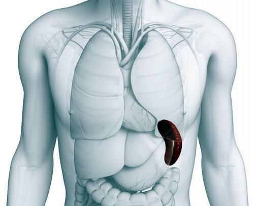 болит мышца спины слева вдоль позвоночника