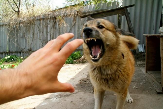 Что делать, если укусила домашняя собака: первая помощь и дальнейшее лечение, меры предосторожности