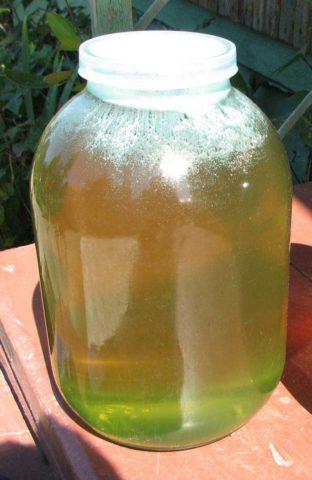Кипрейный мед – пример монофлорного меда