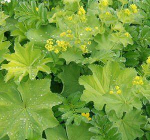 Диабет и растения