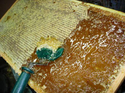 Мед будет полезен только в том случае если пчелы полностью запечатали соты восковыми крышечками