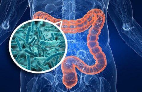 Микрофлора кишечника обеспечивает иммунитет человека