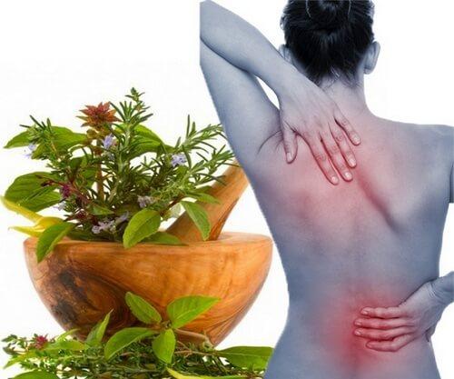 народные средства от боли в спине и пояснице