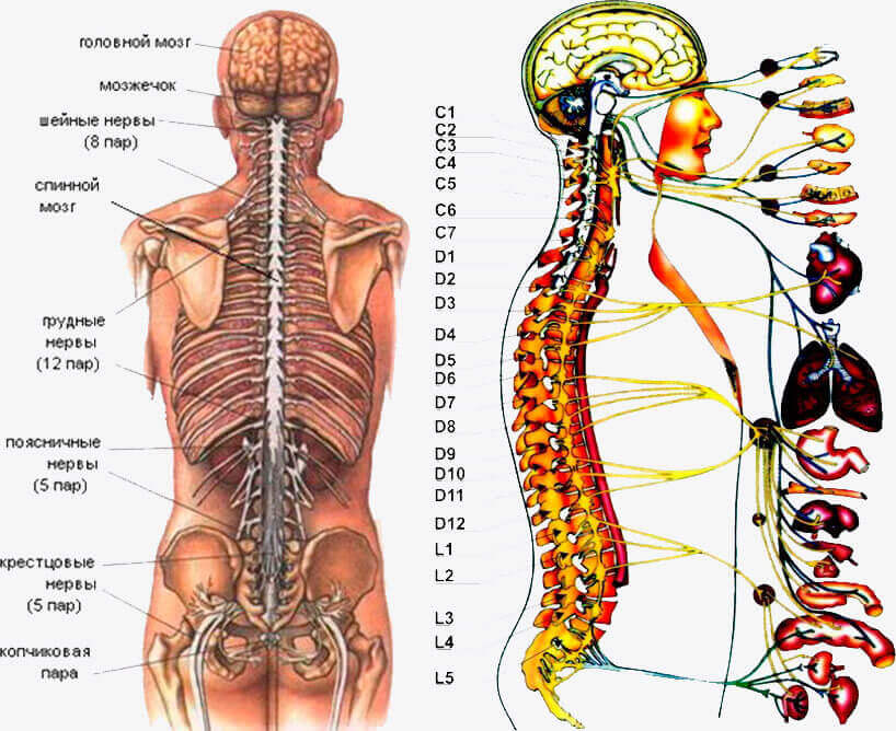 невралгия симптомы у взрослых спина