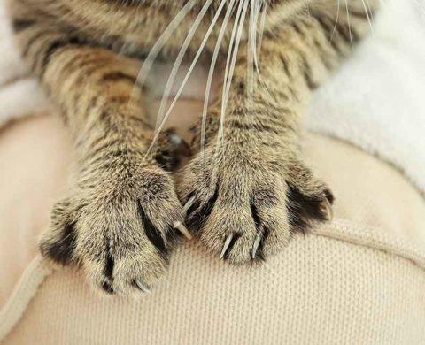 Опасны ли кошачьи укусы.