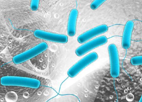 Опасным возбудителем бактериального процесса является синегнойная палочка.
