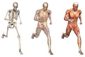 Физкультура для суставов