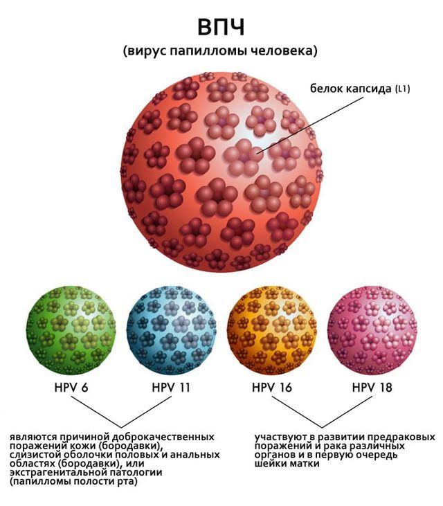 Штаммы вируса папилломы человека