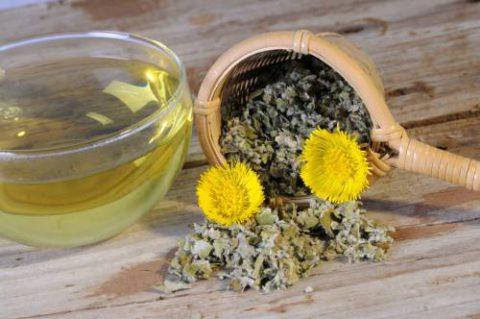 Отвар листьев мать-и-мачехи - натуральное отхаркивающее средство, полезное при пневмонии