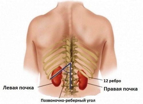 болит мышца на спине справа от позвоночника