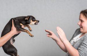 Последствия укуса собаки: влияние травмы на организм человека, осложнения и методы их лечения