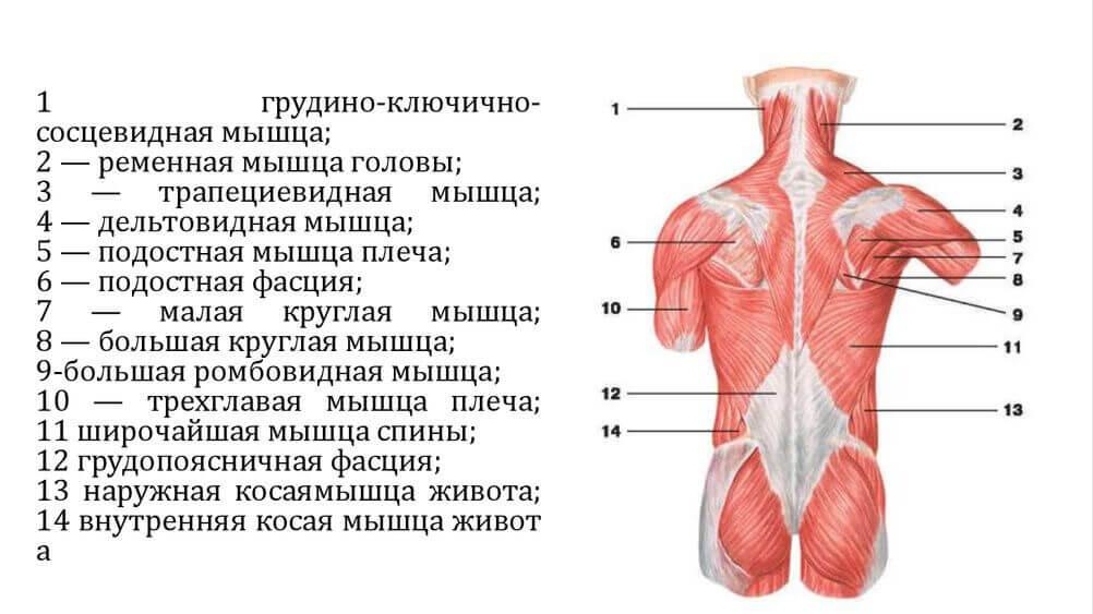 болит широчайшая мышца спины справа