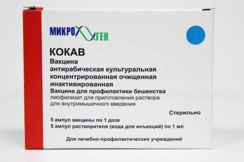 При нападении бродячих четвероногих в обязательном порядке назначают антирабическую вакцину.