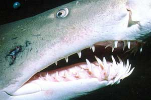 Шиловидные зубы