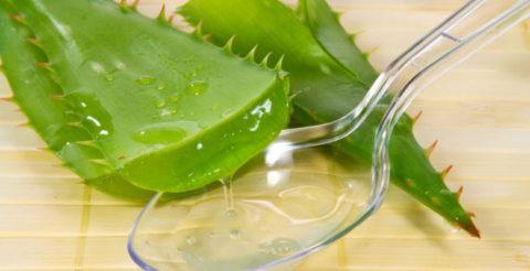 Сок алоэ оказывает помощь в лечении бронхита.