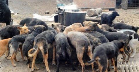 Стая бродячих псов