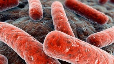 Существует множество разновидностей микобактерий.