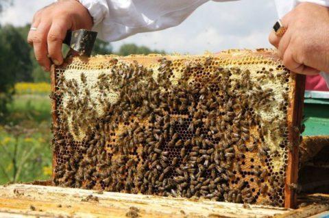 Только натуральный мед обладает лечебными свойствами.