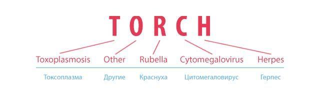 TORCH-анализ