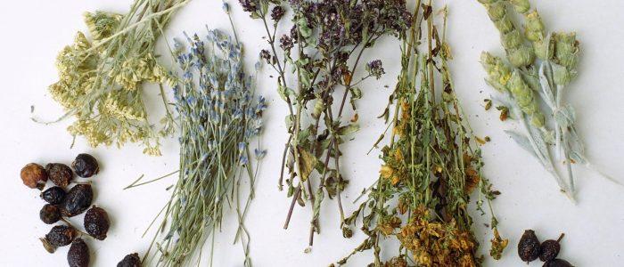Травы от остеохондроза