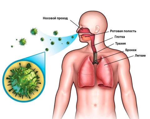 Как распространяется инфекция?