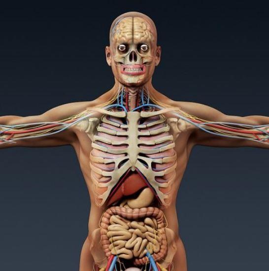 Герпес внутренних органов симптомы анатомия