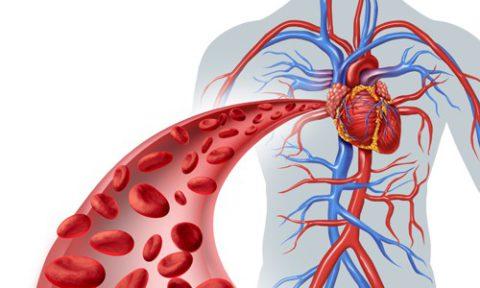 Важнейшей задачей дыхательной гимнастики является улучшение циркуляции крови