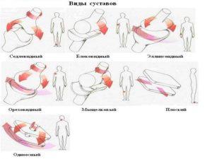 Разновидности движений в суставах