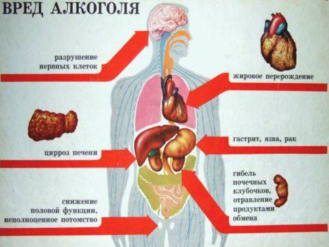 Вредное влияние алкоголя на организм